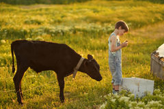 Boy on field with calf Royalty Free Stock Photos