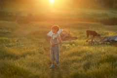 Boy on field with calf Stock Images