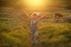 Boy on field with calf Royalty Free Stock Image