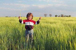 Boy in field, Child Royalty Free Stock Images