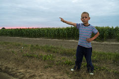 Boy on field corn in the evening Stock Image