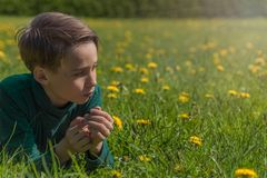 Boy on field of dandelions stock images