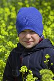Boy in the field with flowers royalty free stock images