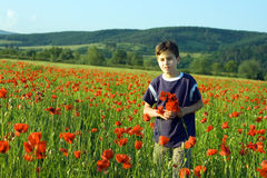 Boy in the field of poppy flowers Stock Images