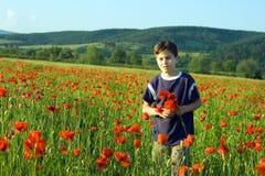 Boy in the field of poppy flowers. Boy picking poppy flowers in the field stock images