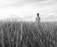 Boy on the field of rye. royalty free stock photo