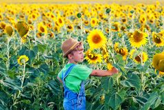 Boy on a walk in the field with sunflowers. A boy in a field with sunflowers . Child on a walk in the countryside stock photo