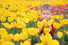 Boy on field of tulips Stock Photo