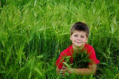 Boy on a  field of wheat Stock Image