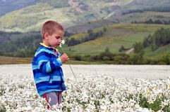 Boy on the field of white narcissus poeticus in spring royalty free stock photography
