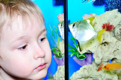 Boy and fish Royalty Free Stock Images