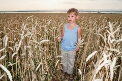A boy of five years stands in a large wheat field. Boy of five years stands in a large wheat field, autumn field royalty free stock photo