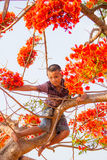 Boy on the flame tree. Royalty Free Stock Images
