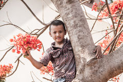 Boy on the flame tree. Royalty Free Stock Photography