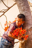 Boy on the flame tree. Royalty Free Stock Image