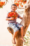Boy on the flame tree. Stock Photography