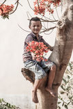 Boy on the flame tree. Royalty Free Stock Photos