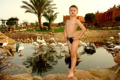 The boy from a flamingo 2 Stock Photo