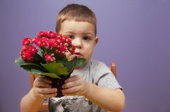 Boy with flower Stock Photo