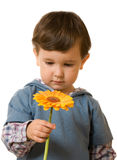 Boy & flower Royalty Free Stock Images