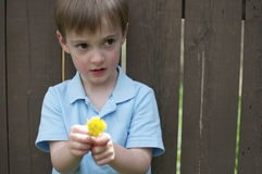 Boy with Flower Against Fence. A cute little boy holds a flower standing near a wooden fence Royalty Free Stock Photo