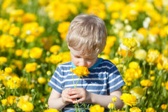 Boy at flower field Stock Photography