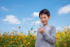 Boy in flower field Royalty Free Stock Images
