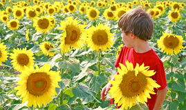 Boy and Flower Talking Stock Image