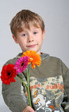 Boy with flowers. Studio portrait of caucasian white boy holding three colorful Gerbera flowers stock photo