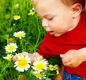 Boy in flowers Stock Photos
