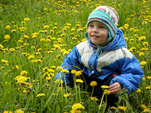 Boy and flowers. Meadow stock photos