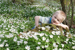 Boy in flowers. Boy in the forest full of spring flowers stock photos