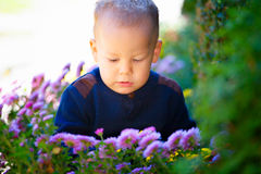 Boy and flowers Royalty Free Stock Image
