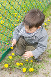 Boy and flowers Stock Photography