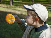 Boy and fly agaric. The boy blows off dots from fly agaric Royalty Free Stock Images