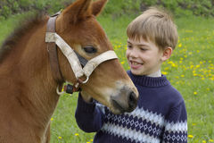 Boy and foal Royalty Free Stock Photography