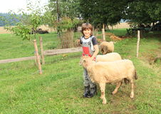 Boy stroking a sheep Royalty Free Stock Photography