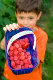 Boy with fresh raspberries. A young boy showing off his freshly picked raspberries in a pick your own farm Royalty Free Stock Photos