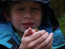 Boy and frog Stock Image