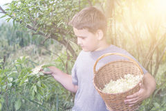 Boy with full herbs flower basket Royalty Free Stock Photo