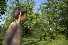 Boy in garden. Six-year-old boy with naked body and wet skin in summerlike garden royalty free stock image