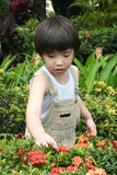 Boy at garden. Little boy at the garden exploring to the nature Royalty Free Stock Photo
