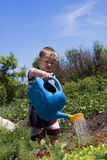 Boy in a garden Royalty Free Stock Image