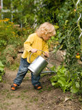 Boy in the garden. Little blond haired boy pouring water out of a ewer on salad plants Stock Image