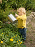 Boy in the garden. Little blond haired boy pouring water out of a ewer on salad plants Royalty Free Stock Image