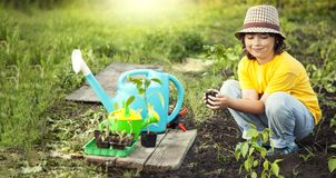 Boy in the garden admires the plant before planting. Green Sprout in Children Hands.  stock photography