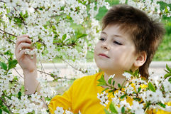 Boy in the garden in spring Royalty Free Stock Image