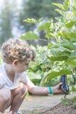Boy gardener cultivating the land Stock Image