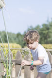 Boy gardener at the garden Stock Images