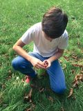 Boy gathering the chestnuts in the park Stock Image